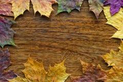 Foglie di acero sui precedenti di legno Fotografia Stock