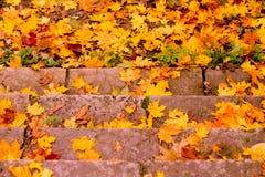 Foglie di acero cadute autunno variopinto Fotografia Stock Libera da Diritti