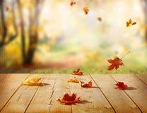 Foglie di acero variopinte sulla tavola di legno Sedere naturali delle foglie cadenti Fotografia Stock Libera da Diritti