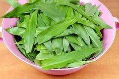 Foglie di aglio selvaggio (ursinum dell'allium) Fotografie Stock