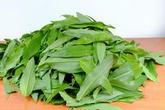 Foglie di aglio selvaggio (ursinum dell'allium) Immagine Stock