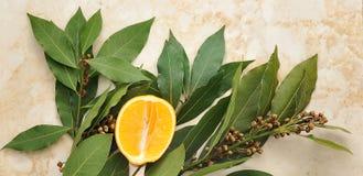 Foglie di alloro con i semi e giallo arancione Fotografia Stock Libera da Diritti