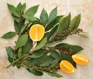Foglie di alloro con i semi e giallo arancione Fotografia Stock