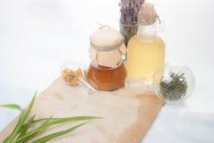 Foglie di Aloea con le erbe Fotografia Stock