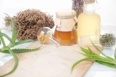 Foglie di Aloea con le erbe Immagini Stock