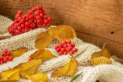 Foglie di Autumn Yellow con la sorba rossa immagini stock