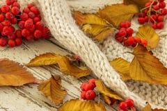 Foglie di Autumn Yellow con la sorba rossa fotografia stock
