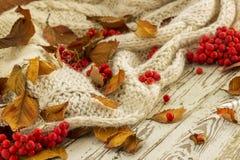 Foglie di Autumn Yellow con la sorba rossa fotografie stock