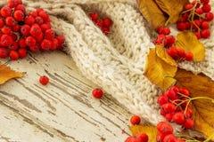 Foglie di Autumn Yellow con la sorba rossa fotografia stock libera da diritti