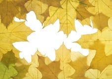 Foglie di autunno Fotografie Stock Libere da Diritti