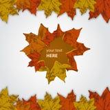 Foglie di autunno Fotografie Stock
