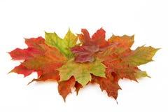 Foglie di autunno Fotografia Stock Libera da Diritti