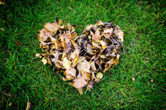 Foglie di autunno immagini stock