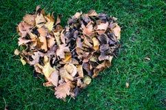 Foglie di autunno fotografia stock