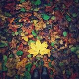 Foglie di autunno al di sotto dei piedi Immagine Stock Libera da Diritti