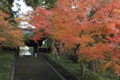 Foglie di autunno al tempio di Engaku immagine stock
