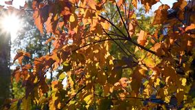 Foglie di autunno all'aperto in un ambiente urbano video d archivio