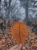 Foglie di autunno arancio immagini stock