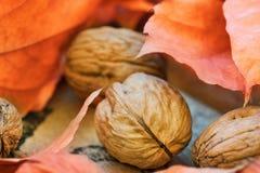 Foglie di autunno arancio asciutte variopinte delle noci sulla scatola stagionata del giardino dell'abbaio sordo, raccolto, ringr Fotografie Stock