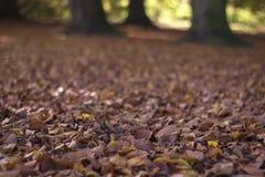 Foglie di autunno asciutte in parco Immagine Stock