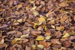 Foglie di autunno asciutte in parco Fotografie Stock
