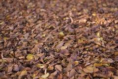 Foglie di autunno asciutte in parco Fotografia Stock
