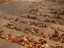 Foglie di autunno asciutte sulle scale Fotografie Stock Libere da Diritti