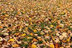 Foglie di autunno - beckgrounds fotografia stock libera da diritti
