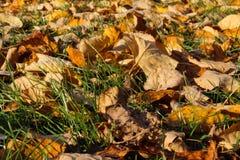Foglie di autunno - beckgrounds immagini stock libere da diritti