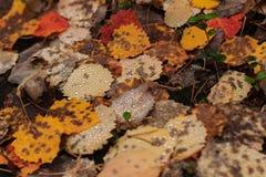 Foglie di autunno cadute Fotografia Stock