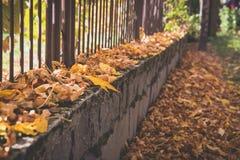 Foglie di autunno cadute Brown sul marciapiede immagine stock libera da diritti