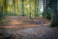 Foglie di autunno cadute in legno immagini stock libere da diritti