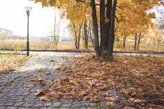 Foglie di autunno cadute in parco fotografie stock libere da diritti