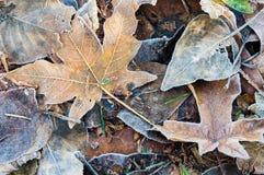 Foglie di autunno cadute per fondo Fotografia Stock