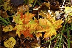 Foglie di autunno cadute su un sentiero forestale. Immagini Stock Libere da Diritti
