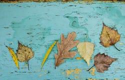 Foglie di autunno cadute sul bordo di legno dipinto anziano Priorità bassa di autunno Fotografia Stock