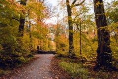 Foglie di autunno cadute sulla traccia di camminata nella foresta di Salcey il giorno nuvoloso - orizzontale Fotografia Stock