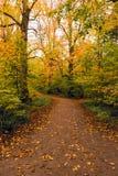 Foglie di autunno cadute sulla traccia di camminata nella foresta di Salcey il giorno nuvoloso - verticale Fotografia Stock