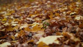 Foglie di autunno cadute variopinte su terra stock footage