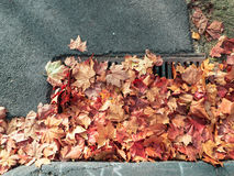 foglie di autunno che bloccano uno scolo Immagini Stock Libere da Diritti