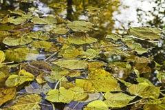 Foglie di autunno che galleggiano sull'acqua Immagine Stock
