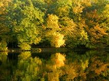 Foglie di autunno che si rispecchiano in acqua Immagine Stock Libera da Diritti