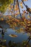 Foglie di autunno Colourful sopra il lago sanguinato Immagine Stock