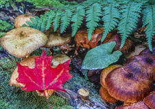 Foglie di autunno con i funghi e le felci Immagini Stock