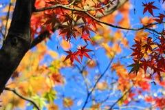 Foglie di autunno con il bello fondo del cielo Immagini Stock Libere da Diritti