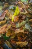 Foglie di autunno con la carta da parati strutturata Fotografia Stock