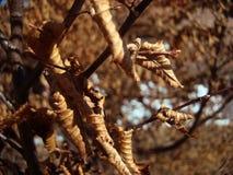 Foglie di autunno da qualche parte nelle montagne fotografia stock libera da diritti