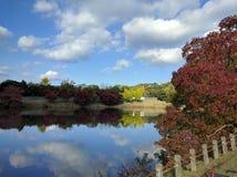 Foglie di autunno dal lago in parco immagine stock