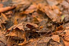 Foglie di autunno di decomposizione, fuoco molle immagine stock