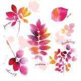 Foglie di autunno dell'acquerello Immagine Stock Libera da Diritti